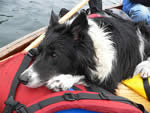 Thumbnail image for Wilderness Canoeing with Dogs