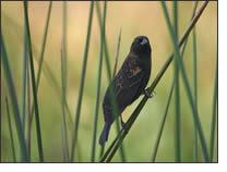 adirondacksbird